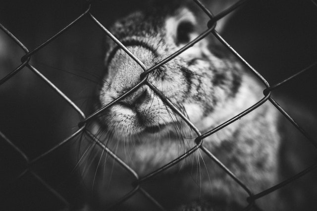 A bunny in a cage